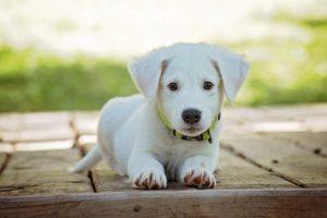 wygodna psia torba z dobrego materiału