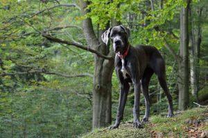 pies szukający domu